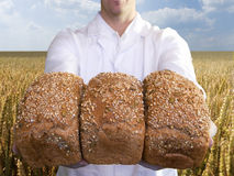 Close up of baker holding fresh bread loaves in wheat field Royalty Free Stock Images