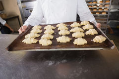 Close up of baker holding tray of raw dough Royalty Free Stock Photo