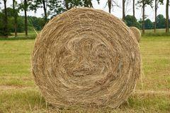 Hay bale in the meadow. The end of haymaking Royalty Free Stock Image
