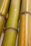 Close up of bamboo stock photo