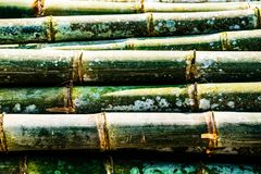 Close up bamboo for background, wallpaper. Close up Pile of Green Bamboo bundle for background, wallpaper, backdrop, Bambusoideae Royalty Free Stock Photography