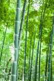 Close-up bamboo in the bamboo forest Stock Images