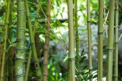 Close-up of bamboo stems in Lluc botanical garden, Majorca Stock Photos