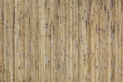Bamboo texture background. Stock Images