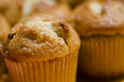Close-up of banana-nut muffin Stock Image