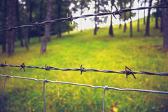 Close up on barb wire with trees in background Royalty Free Stock Photo