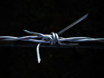 Close up of barbed Stock Photography