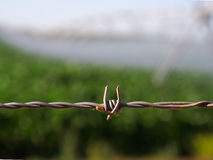 Close up of barbed wire. Royalty Free Stock Image