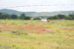 Close up of barbed wire fence on private ranch. Blurred green field with animals on background stock photo