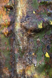Close up of bark Royalty Free Stock Images