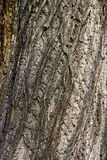 Close up of bark Royalty Free Stock Photography