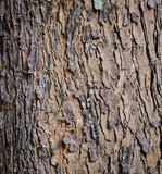 Close up bark. Background texture Royalty Free Stock Photo