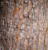 Close up bark. Background texture stock photo