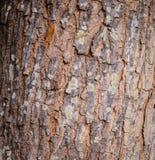 Close up bark. Background texture Stock Photo