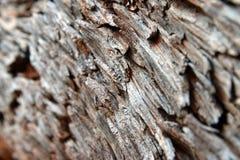Close Up Bark Diagonal. Close Up tree Bark Diagonal Royalty Free Stock Image