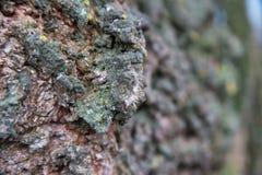 Close-up of bark. Close-up of an interesting looking treebark Royalty Free Stock Photo