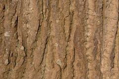 Close up of the bark of a large tree basking in the sun Stock Image