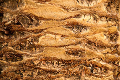 Close up of the bark of a palm tree. Stock Photo