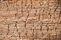 Close up of the bark of a palm tree. Stock Photos