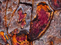 Close up of the bark of a quiver tree. Colourful close up of the bark of the Namibian quiver tree. Colours range from bright orange to purple - brown. Good for royalty free stock images