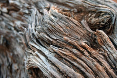 Close Up Bark Swirl Royalty Free Stock Images