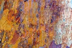 Close-up of Bark on Tree Royalty Free Stock Image