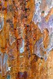 Close-up of Bark on Tree Stock Images