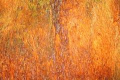Close-up of Bark on Tree Royalty Free Stock Photo