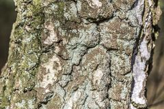Close up of the bark of a tree with green mold and brown turquoise and white spots royalty free stock photos