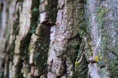 Close-up of bark. A close-up of tree bark showing the different layers Royalty Free Stock Images