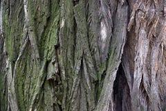Close-up bark of tree Royalty Free Stock Photos