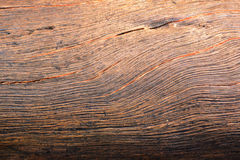 Close up bark wooden texture background. Royalty Free Stock Photo