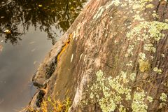 Close up of barren rock granite with moss and lichen on the slow royalty free stock photography