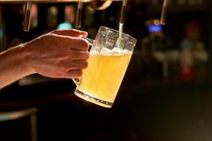 Close up bartender hand pouring lager beer. Stock Image