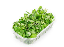 Close up of basil in box. Stock Photography