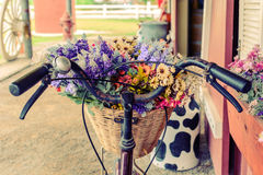 Close up basket with flower on bicycle Stock Photography