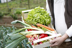 Close-up of basket full of fresh vegetables Stock Images
