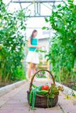 Close-up basket of greens in woman's hands Royalty Free Stock Images