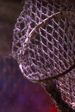 Close up of basketball hoop with ragged netting Stock Image