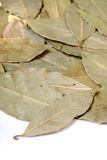 Close-up of bay leaves Stock Photography