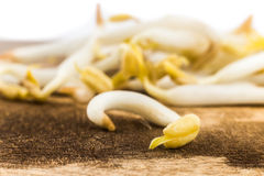 Close up of bean sprout on wooden chopping board Stock Photography