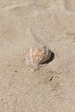 Close up of beautiful big seashell on sandy beach. Summer holida Royalty Free Stock Photos