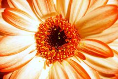 Close up of a beautiful flower stock image