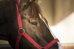 Foreground of a horse eye royalty free stock photos