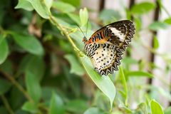 Beautiful butterfly on green leaf. Close up beautiful butterfly on green leaf Stock Image