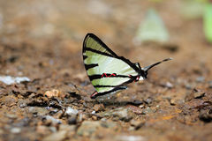 Close-up of beautiful butterfly resting on the ground Royalty Free Stock Photography