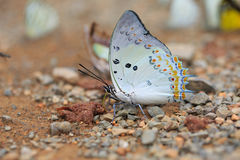 Close-up of beautiful butterfly resting on the ground Stock Photography