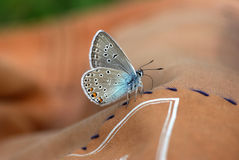 Close up of Beautiful butterfly Royalty Free Stock Photos