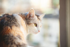 Close-up of  beautiful cat Royalty Free Stock Image