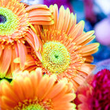 Close up on beautiful colorful bouquet of flowers Royalty Free Stock Photography